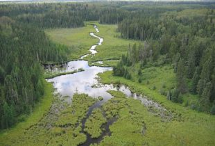 Field Guide of Boreal Wetland Classes in the Boreal Plains Ecozone of Canada