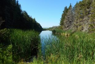 The Government of Canada and Ducks Unlimited Canada safeguard important habitats at four National Wildlife Areas