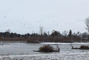 Birds and bird watchers will benefit from habitat improvements in Elgin County