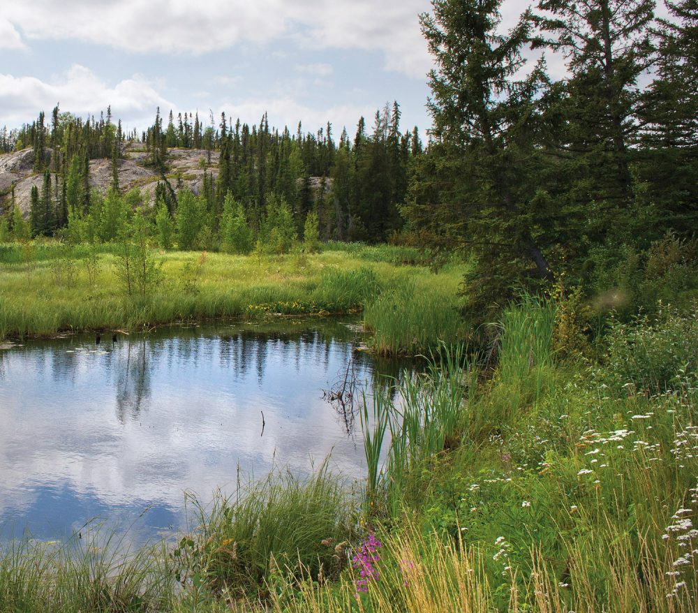 DUC and the Akaitcho Treaty 8 Tribal Council undertake an impressive conservation effort in the boreal forest