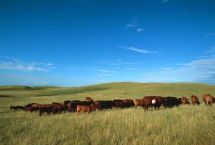 Forage Ahead with High-Quality Seed