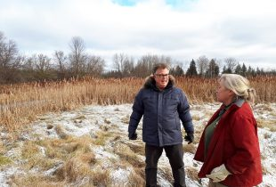 Re-establishing important wetlands in King Township