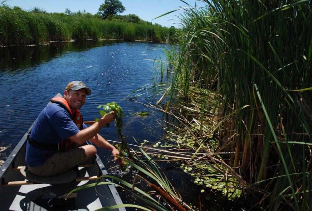 DUC's Kyle Borrowman working from a canoe in the coastal wetlands of Wolfe Island.