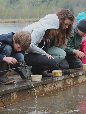 Wetland Activities