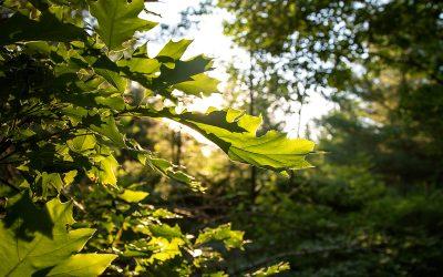 Protecting Ottawa's wildest landscape