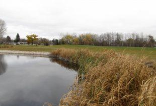 Links to wetlands