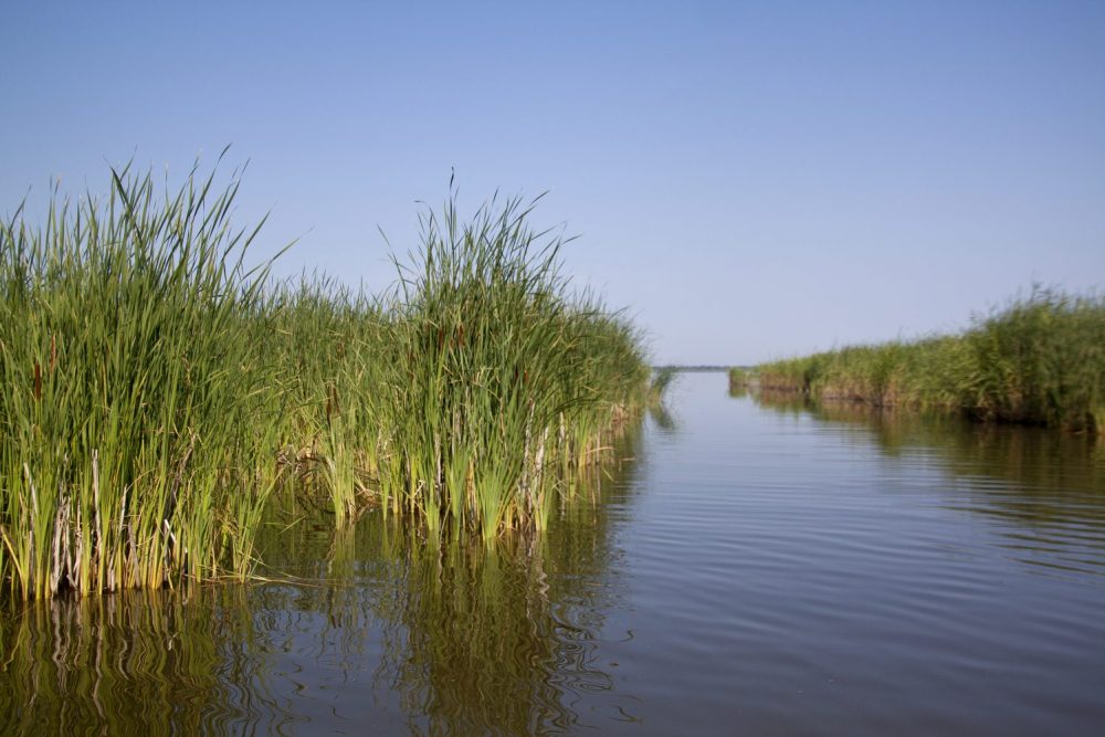 DUCwill protect more than 220 hectares of prairie wetlandsand grasslands, thanks to funding released throughthe Conservation Trust.