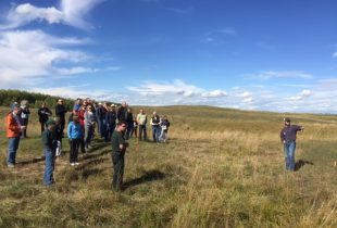 Restoring habitat in grazing country
