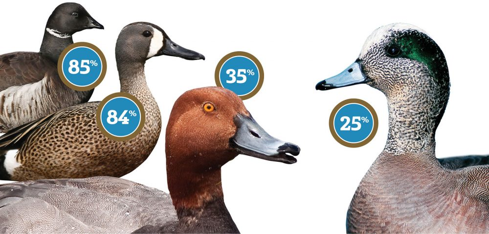 Significant percentages of North America's migratory birds winter in Mexico.