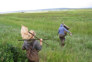 Breaching a dike; saving a salt marsh