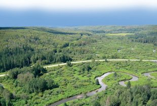 Operational Guide for Forest Road Wetland Crossings