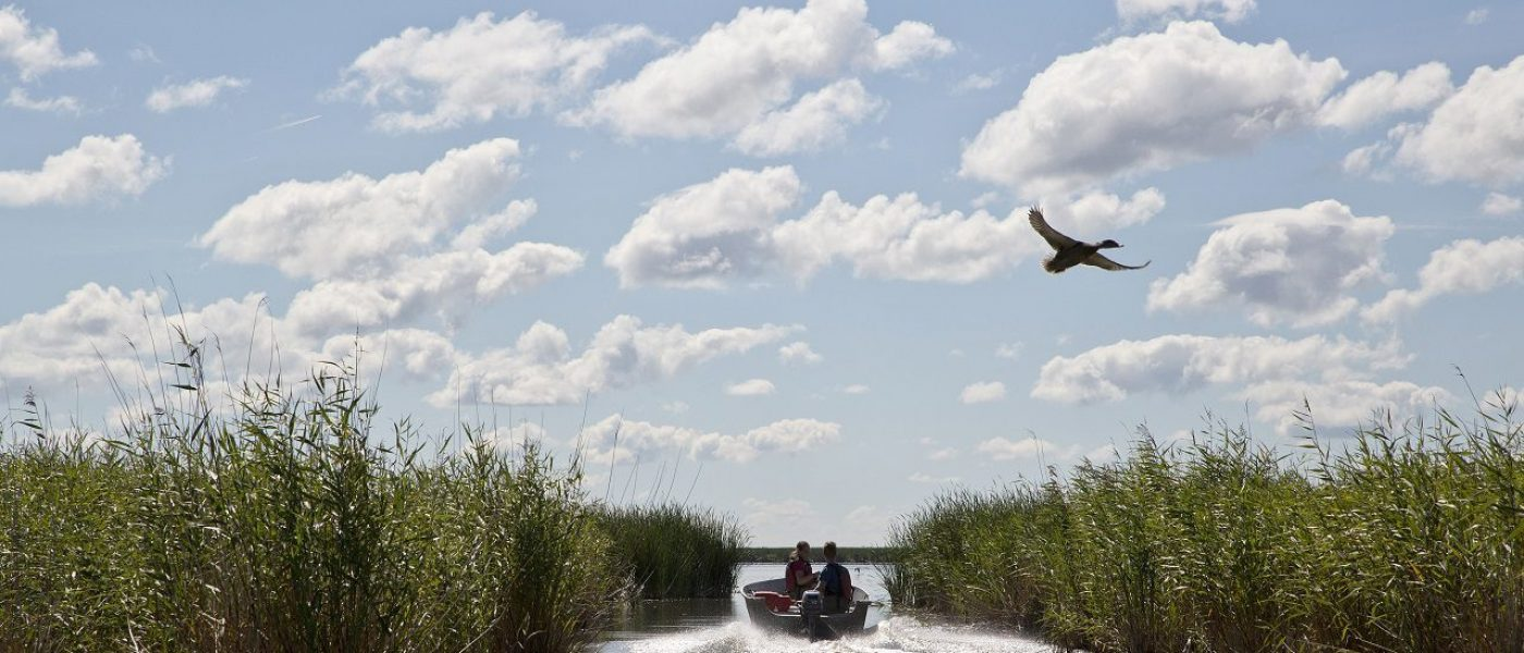 Thank you to the thousands of people who stepped up to help <em>Rescue Our Wetlands</em>.