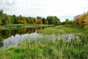 Quebec passes legislation to conserve wetlands and water