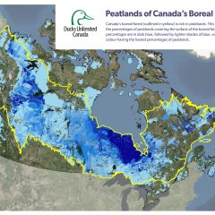Peatlands fight climate change