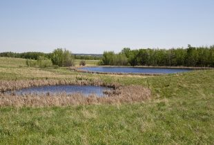 Camrose Creek Research Project
