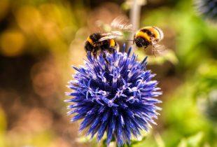 The plight of pollinators