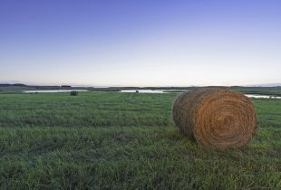 Saskatchewan Hay and Grazing Tenders