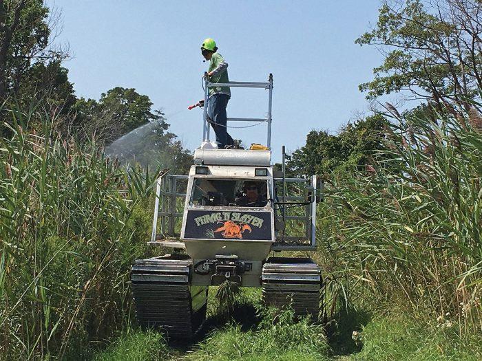 Eric Giles sprays invasive Phragmites at Long Point, Ontario.