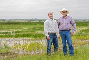 Natural habitat improves grazing land for cattle ranchers