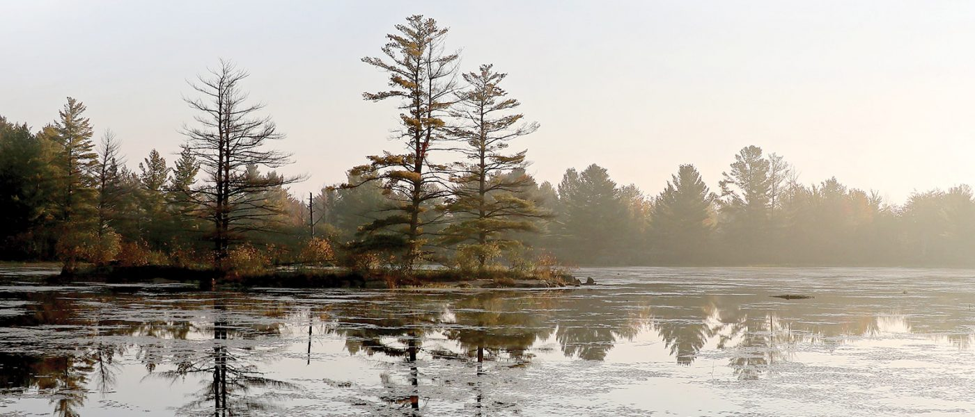 Diverse wetland and forest habitat at the Carp Hills attract wildlife and people alike.