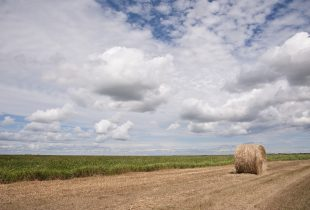 Native hay for tender: Manitoba
