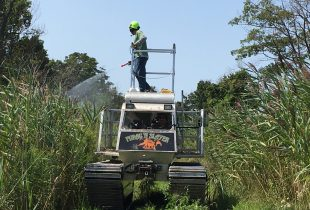 Fighting back against invasive Phragmites