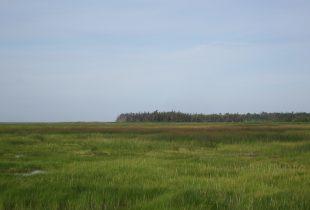 Coastal conservation