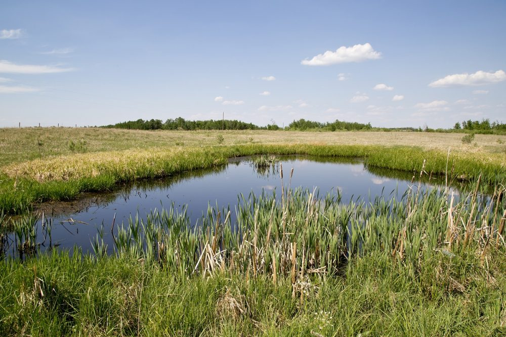 A restored wetland on the Canadian prairies.