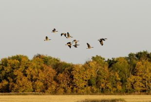 Hunting and Trapping on DUC Lands in Manitoba