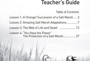 Salt Marshes: Interactions & Ecosystems (Grades 7–9)