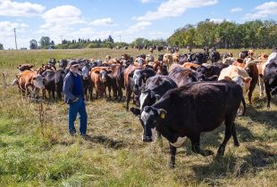 Redvers ranchers earn stewardship award thanks to holistic management