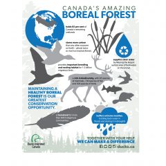 National Forest Week Infographic