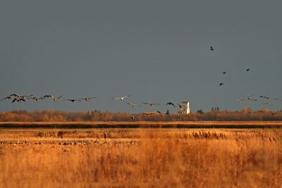 Sharing the responsibility and rewards of waterfowl habitat conservation