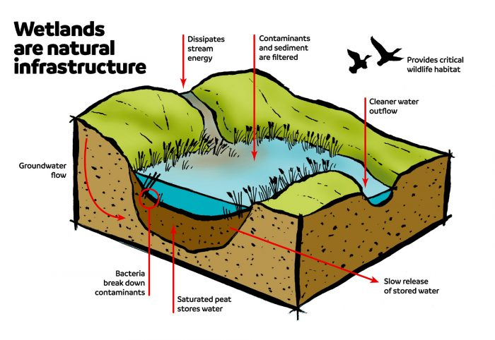 Restored wetlands and uplands can address an array of environmental challenges.