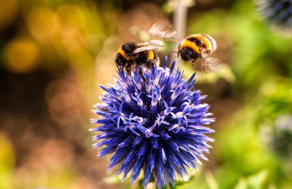 The iconic bumblebee
