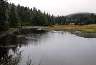 Wetland project will help B.C.'s salmon populations