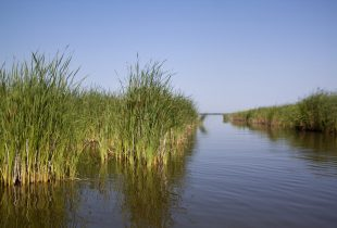 Manitoba's wetlands and grasslandsto benefit from new Conservation Trust