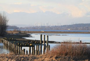 Management by measurement: Assessing the health of tidal marshes on B.C.'s West Coast
