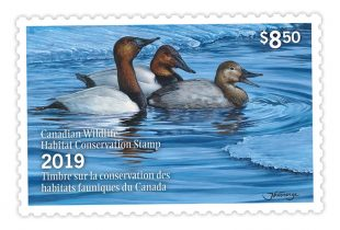 Canada duck stamp sales help fund conservation