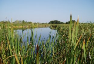 Natural Heritage Conservation Program provides new protection for Canada's wetlands