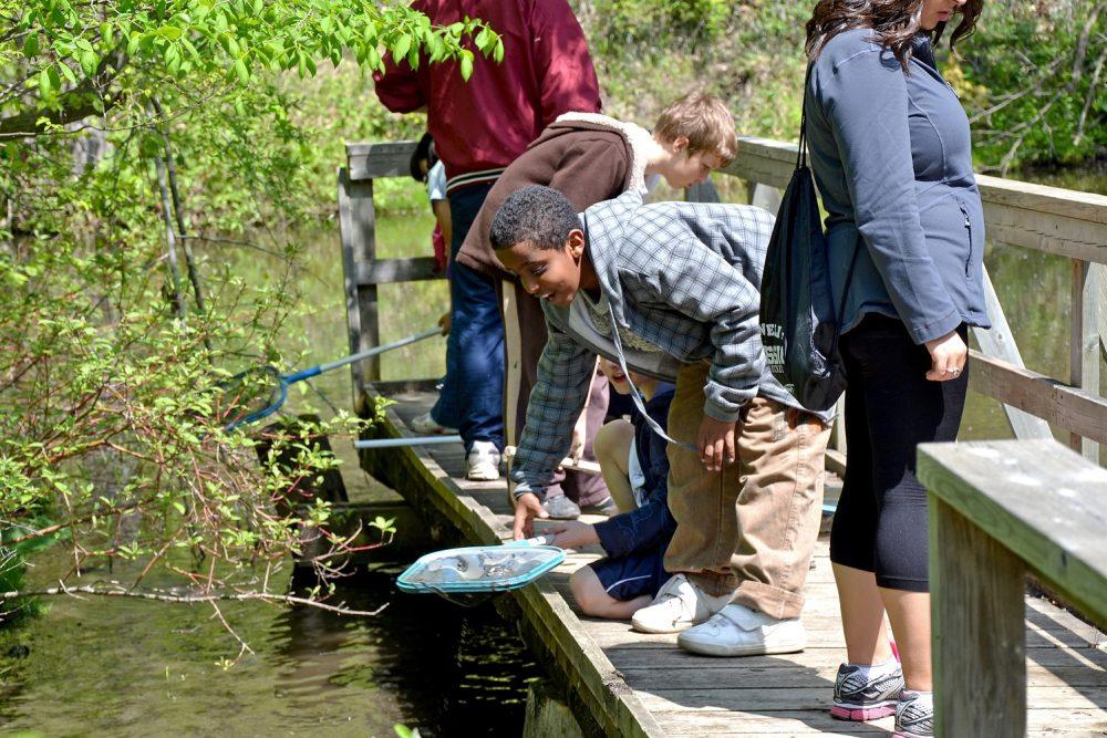 A student enjoys critter-dipping from a wetland boardwalk.