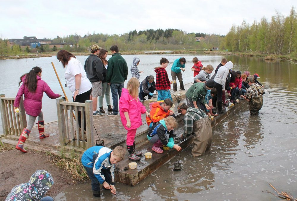 Students critter-dipping at a marsh.