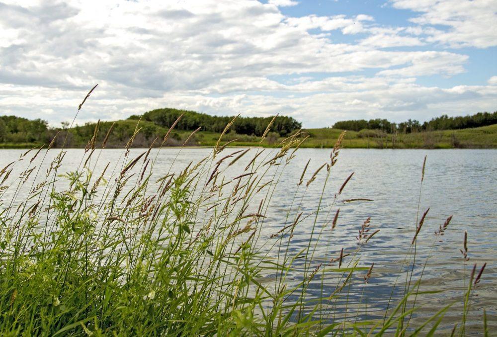 Conserved prairie wetland.