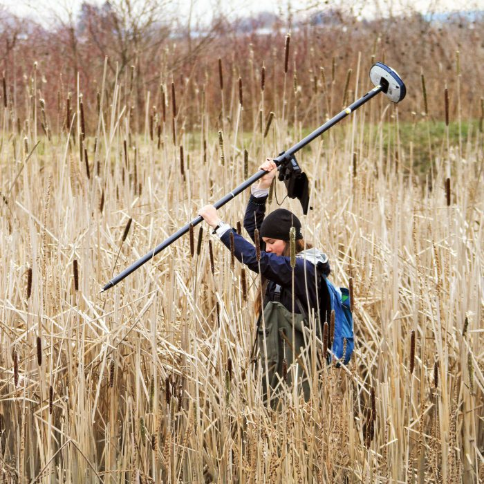 DUC conservation program specialist Megan Winand wades through a patch of invasive cattail on Frenchies Island in the South Arm Marshes of the Fraser River Estuary.