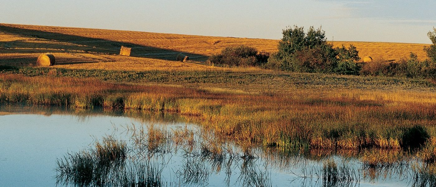 Investments in on-farm conservation work are the future of maintaining wildlife habitat on farmland in Canada.