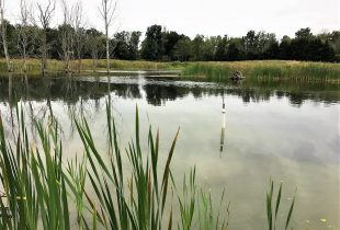 How much can wetlands help reduce summer algae outbreaks?