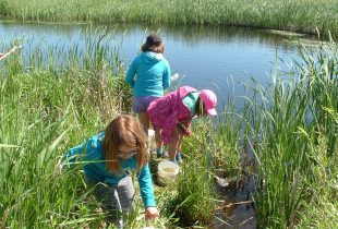Out of the classroom, into the Manitoba marsh