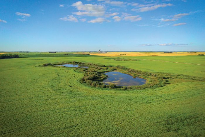 Cherry Project progress shows restored wetlands now thriving
