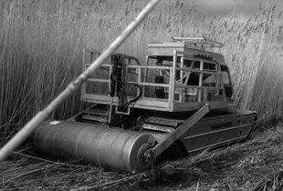 Invasive phragmites and the wetlands of tomorrow