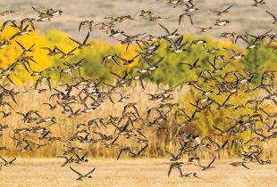 Celebrating 30 years of the North American Wetlands Conservation Act